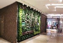 """赣州国大城市广场种植袋式植物墙换成""""秀根""""模块化植物墙"""